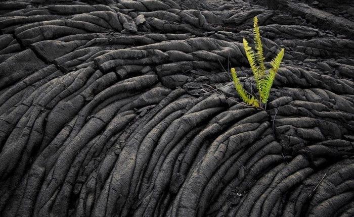Dried Volcanic Lava Big Island