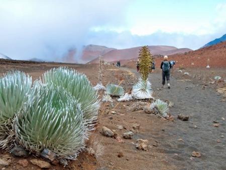 Flora of Haleaka National Park