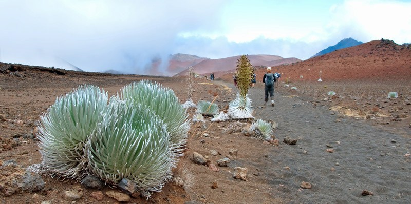 Flora of Haleakala National Park